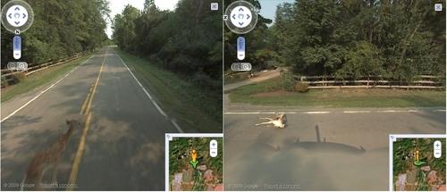 StreetView-Fahrzeug fährt Reh an
