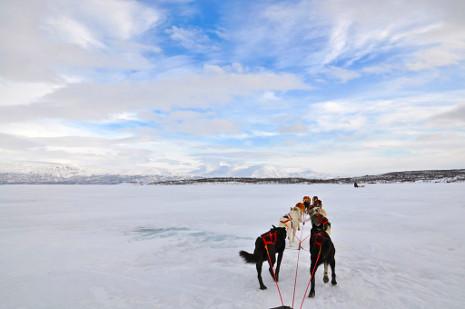 Schlittenhunde - Lake Torneträsk