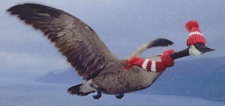 Präventivmassnahmen zur Vogelgrippe