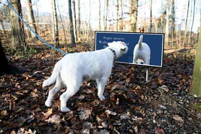Tribis Ferientierheim - Werbung für Hunde