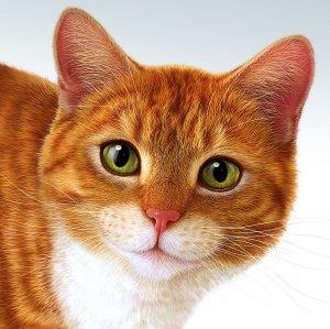 Photoshop-Katze