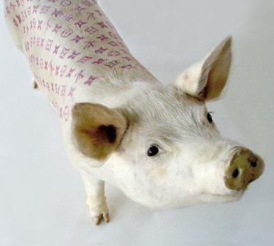 Tätowiertes Schwein